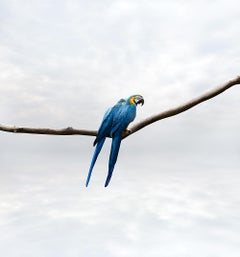 Pondering Parrots