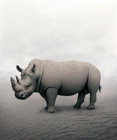 Relax Rhino