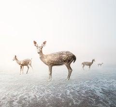 Stay My Deer