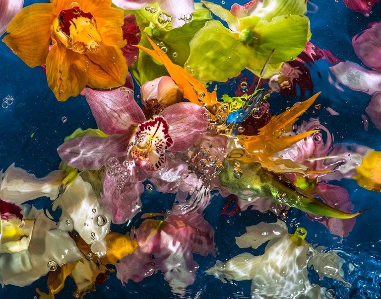 Allan Forsyth Color Photograph - Aqua Flora 001