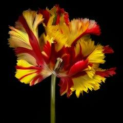 Ghost Flower 005
