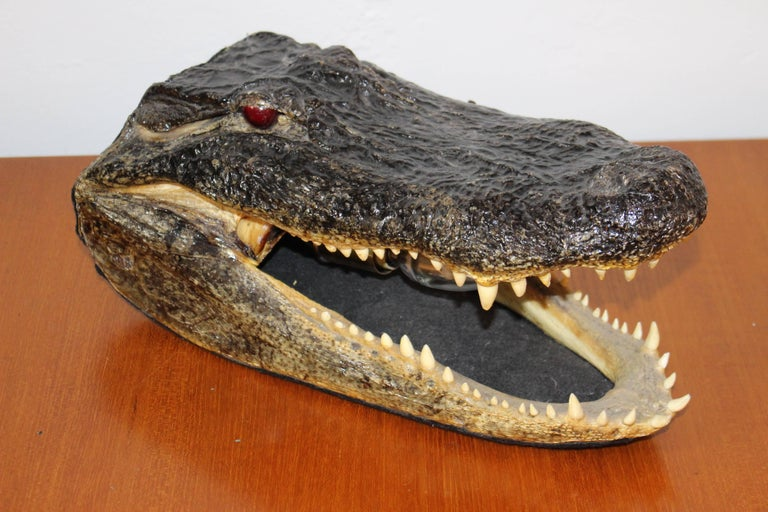 American Alligator Head Table Lamp For Sale