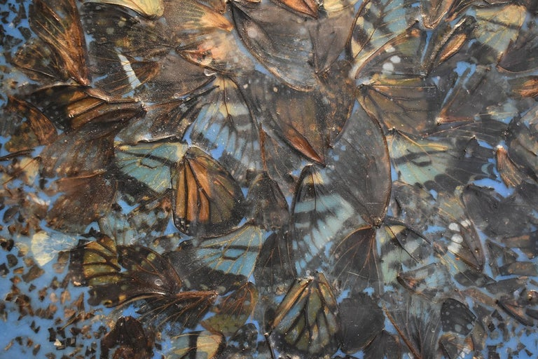 Contemporary abstract blue encaustic painting on panel made with butterfly wings and natural material Cacophony 2, 2017 12 x 12 inches on wood panel Butterfly wings and blue encaustic on panel Hangs on one d-ring, ready to hang as is  This modern,