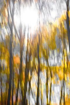 Border Lines, Floral Fine Art Photography, Framed in Plexiglass, Signed
