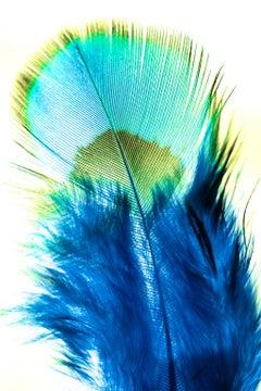 Vibes, Fine Art Photography, Framed in Plexiglass, Signed