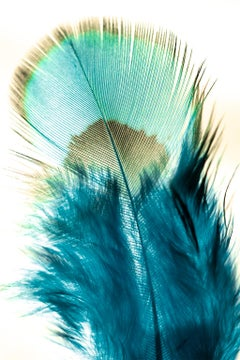 Flock Together, peacock, Fine Art Photography, Framed in Plexiglass, Signed