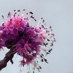 Freak Out, Floral Fine Art Photography, Framed in Plexiglass, Signed