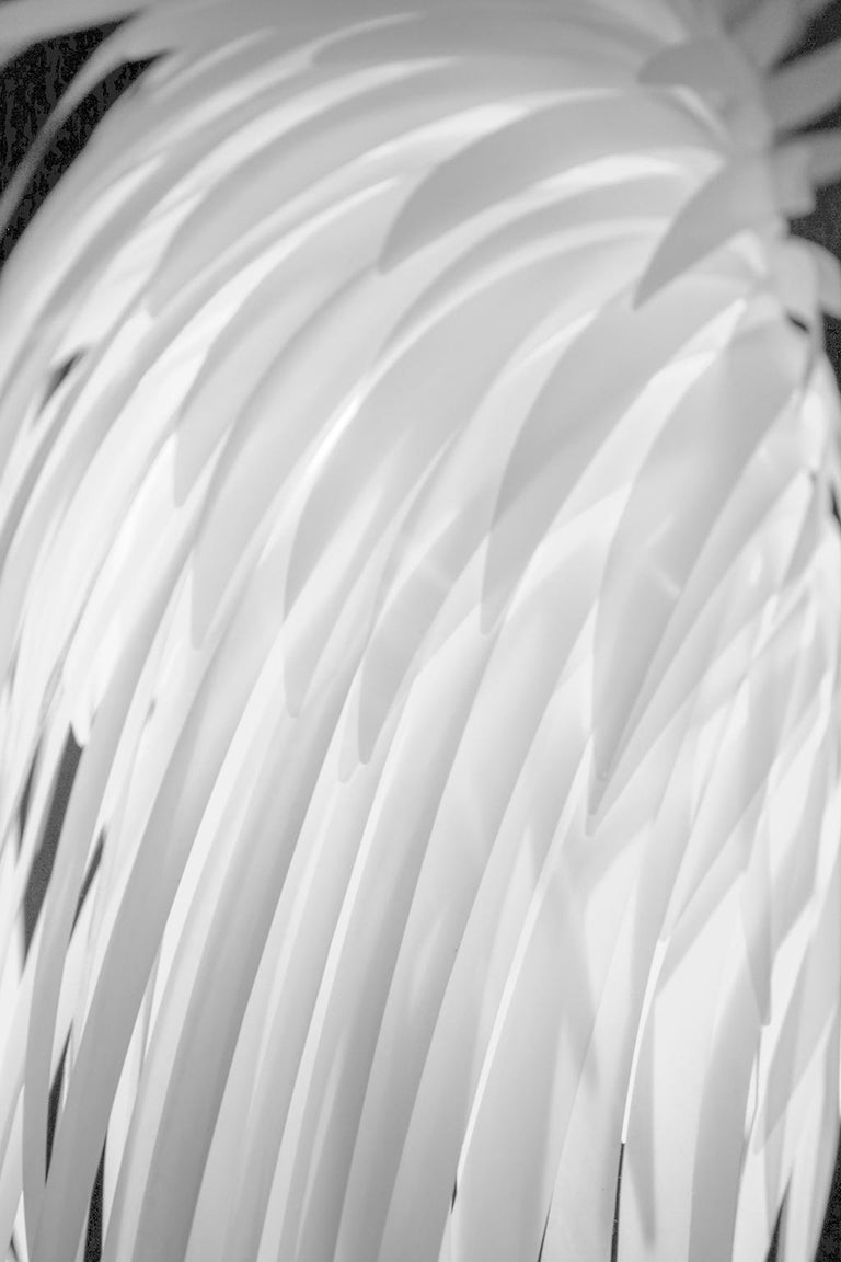Allyson Monson Abstract Photograph - The Dove Cried, Abstract Fine Art Photography, Framed in Plexiglass, Signed