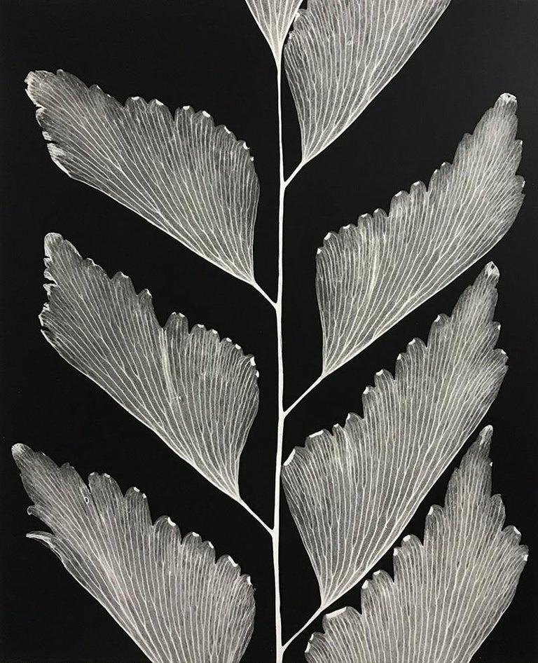 Amanda Means Black and White Photograph - Maidenhair Fern