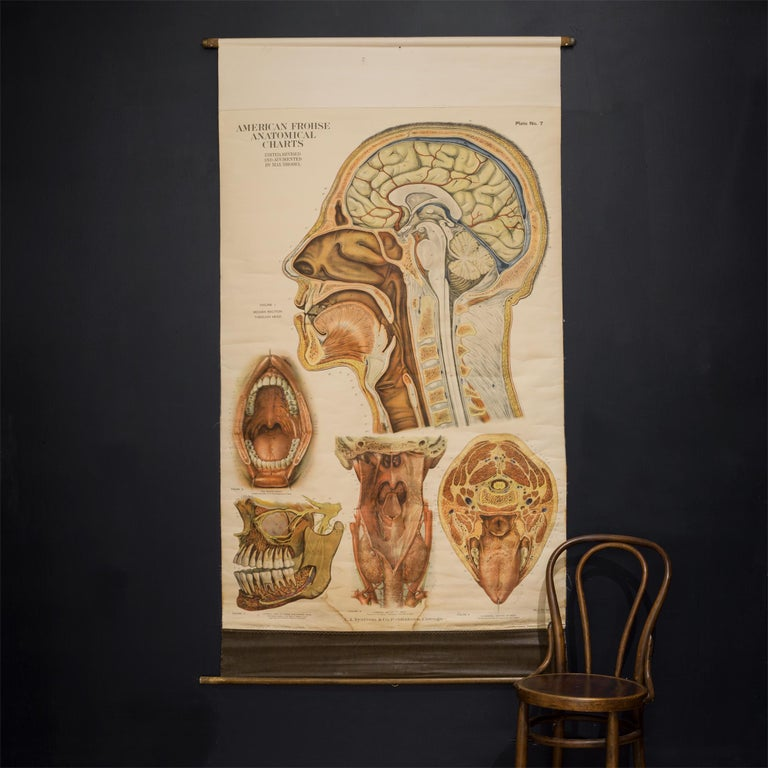 Linen American Frouse Anatomical Chart, circa 1918 For Sale