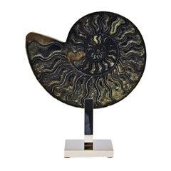 Ammonite Black Sculpture