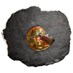 Ammonite Mounted on Bronze