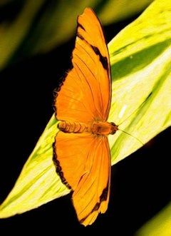 In Free Fall, Butterfly Series, Contemporary Color Photography, Ed of 5