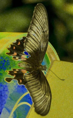 In Full, Butterfly Series, Limited Edition Contemporary Color Photography