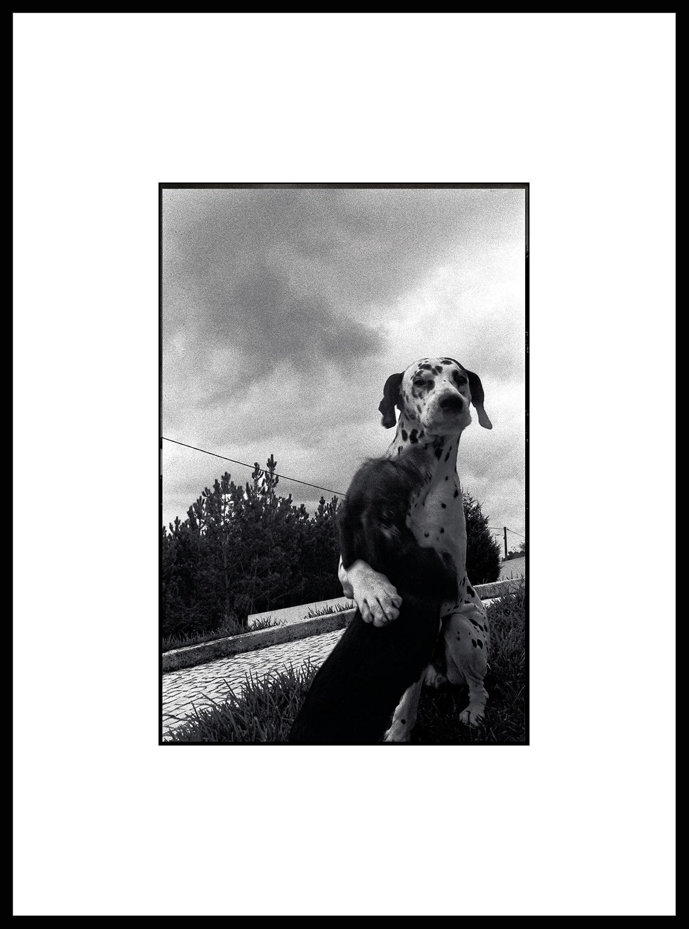 """Friends"" Black & White Photography Gelatin Silver Print Portugal 2001"