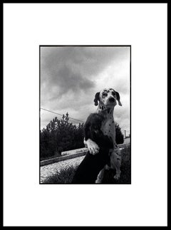 """Friends"" Black & White Photography Gelatin Silver Print Portugal 2001"