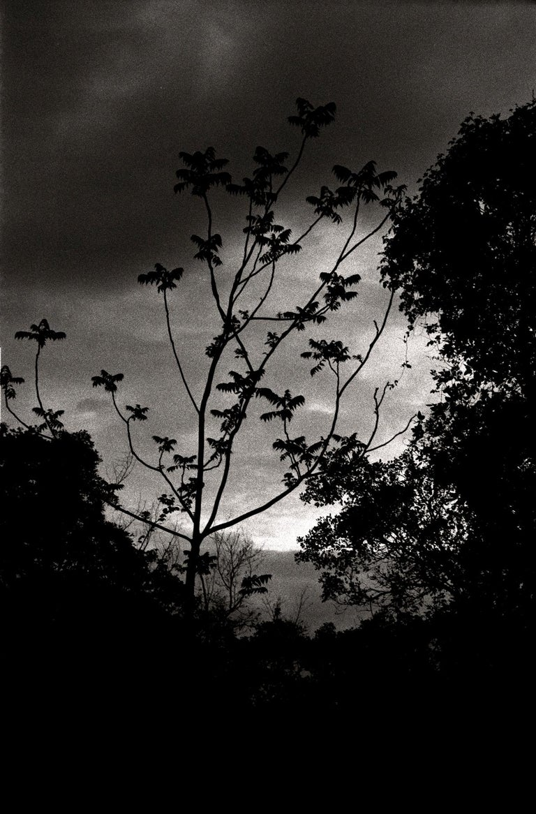 Ana Maria Cortesão Landscape Photograph - Nightfall, Portugal 2000 /Gelatin Silver Print/ Signed