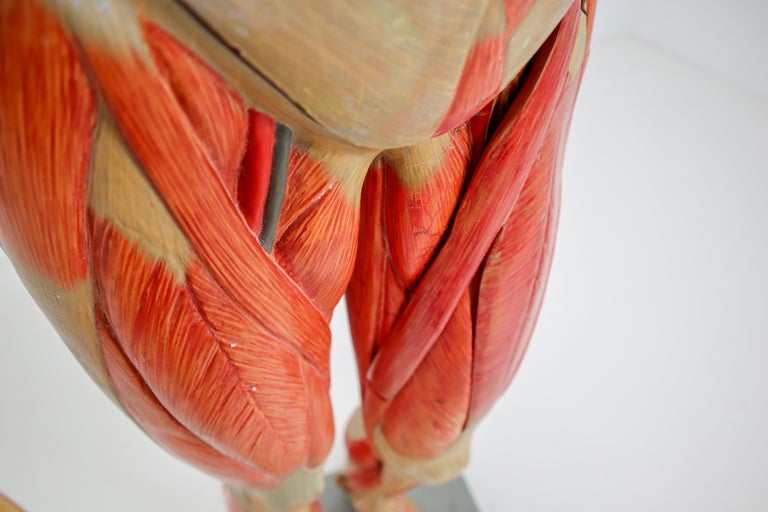 Anatomical Human Model, circa 1930s For Sale 5