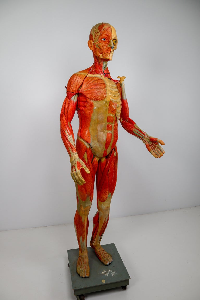 Wood Anatomical Human Model, circa 1930s For Sale