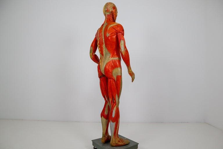 Anatomical Human Model, circa 1930s For Sale 2