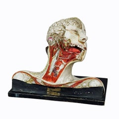 Anatomical Model of a Dissected Head by Nicolas-augier-roux, circa 1920