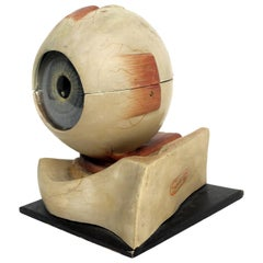 Anatomical Model of the Eye, Complete, Germany, circa 1900