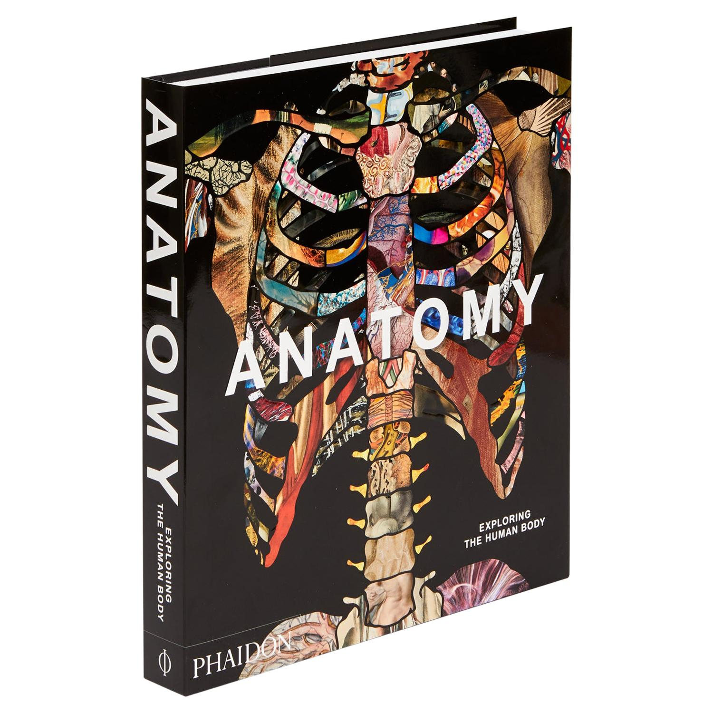 Anatomy Exploring the Human Body