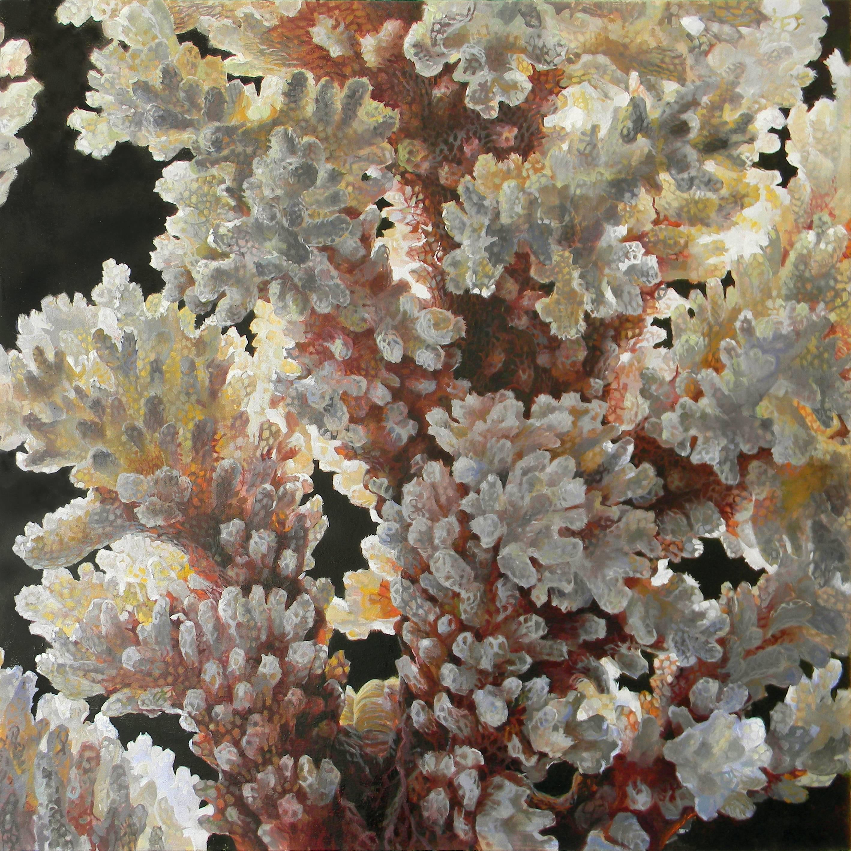 Verrucosa Sanguine, Coral Still Life Painting in White, Peach, Black Background
