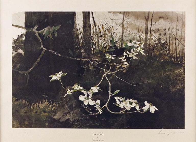 """Dogwood,"" Andrew Wyeth, Flowers in the Forest Woods - Print by Andrew Wyeth"