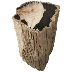 Andrianna Shamaris Exquisite Petrified Wood Side Table