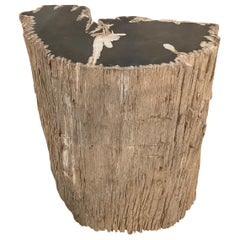 Andrianna Shamaris Fragment Petrified Wood Side Table or Coffee Table