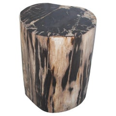 Andrianna Shamaris High Quality Petrified Wood Side Table