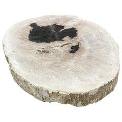 Andrianna Shamaris High Quality Petrified Wood Slab
