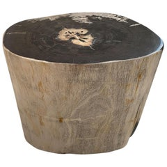 Andrianna Shamaris Impressive High Quality Petrified Wood Side Table