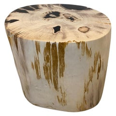 Andrianna Shamaris Impressive High Quality Petrified Wood Side Table