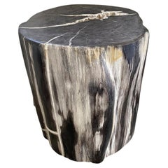 Andrianna Shamaris Impressive Petrified Wood Side Table