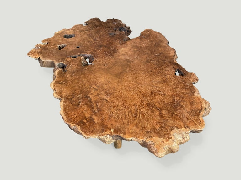 Impressive reclaimed three inch thick teak wood coffee table from the root of a tree. A blend of organic and midcentury. We polished the wood to enhance the grain with a natural oil finish. Floating on midcentury style legs.  Andrianna Shamaris. The