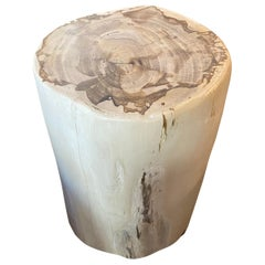 Andrianna Shamaris Minimalist High Quality Petrified Wood Side Table