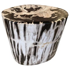 Andrianna Shamaris Oval Contrasting Toned Petrified Wood Side Table