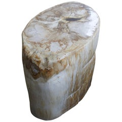 Andrianna Shamaris Oval Petrified Wood Side Table