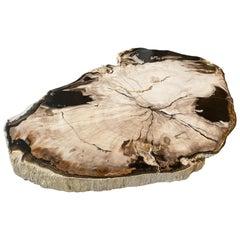 Andrianna Shamaris Petrified Wood Black and White Slab