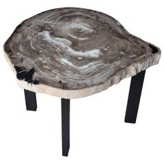 Andrianna Shamaris Petrified Wood Slab Table