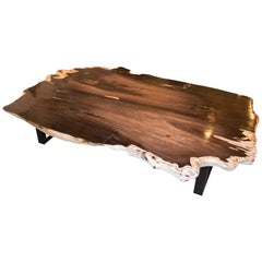 Andrianna Shamaris Rare Black and White Super Smooth Petrified Wood Coffee Table