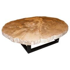 Andrianna Shamaris Rare High Quality Petrified Wood Slab Coffee Table