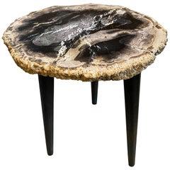 Andrianna Shamaris Rare Palm Petrified Wood Side Table