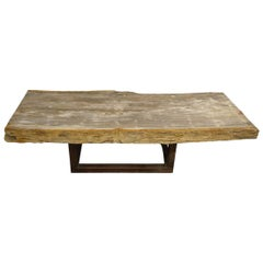Andrianna Shamaris Single Slab Petrified Wood Coffee Table