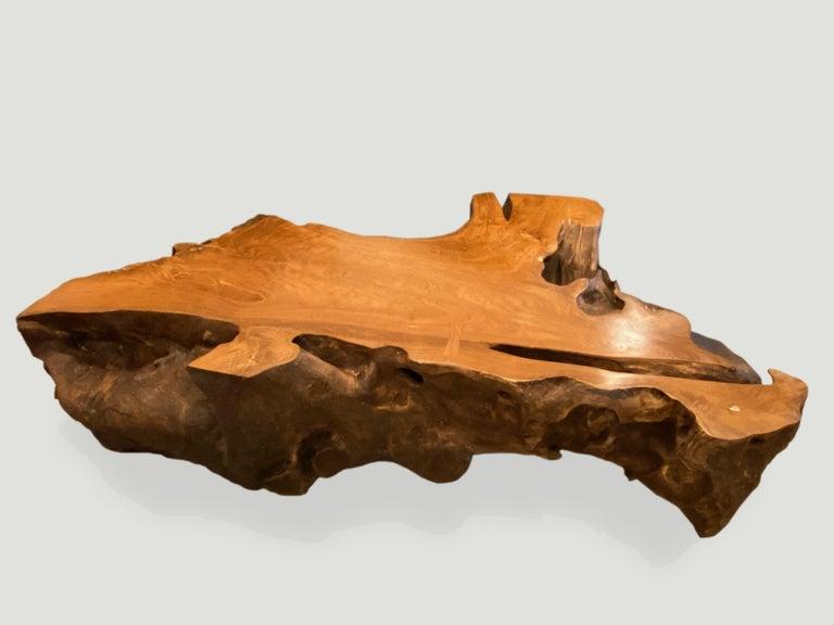 Organic Modern Andrianna Shamaris Single Teak Wood Root Coffee Table For Sale