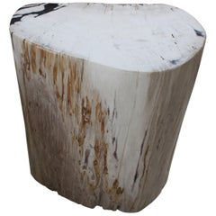 Andrianna Shamaris Soft Toned Rare High Quality Petrified Wood Side Table