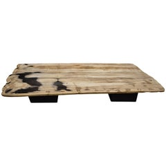 Andrianna Shamaris Super Smooth Petrified Wood Coffee Table