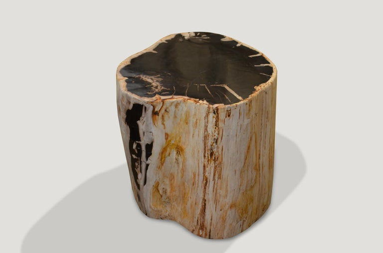Contrasting color tones on this super smooth petrified wood side table.  We source the highest quality petrified wood available. Each piece is hand-selected and highly polished with minimal cracks. Petrified wood is extremely versatile – even